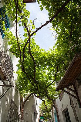 Tunis - p993m1125142 by Sara Foerster