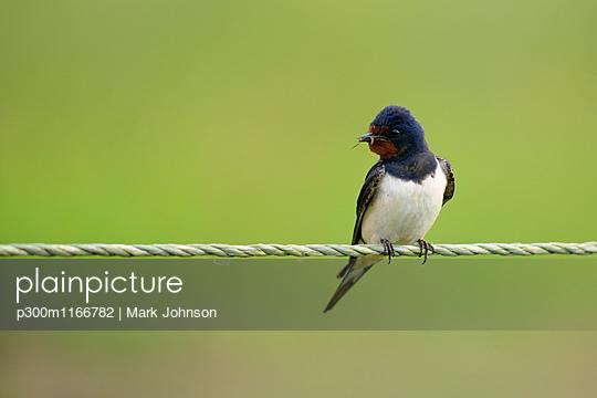 p300m1166782 von Mark Johnson