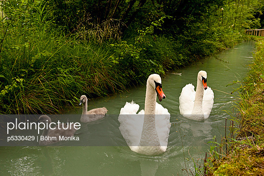 Familie - p5330429 von Böhm Monika