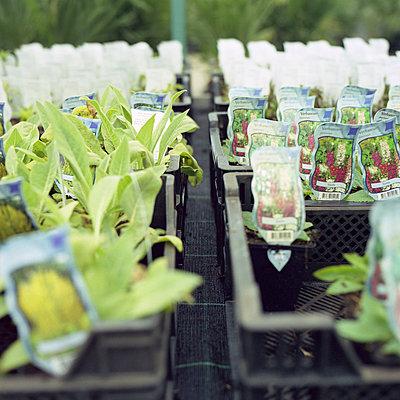 Junge Pflanzen im Gartenmarkt - p1026m834350 by Alexandra Dost