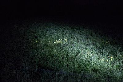 Wiese im Lichtkegel in der Nacht - p1685m2272458 von Joy Kröger