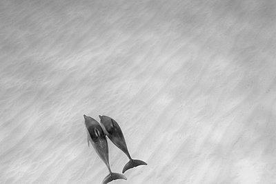 Dolphin - p3432724 by Sean Davey