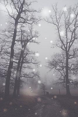 Winterlandschaft - p401m1216939 von Frank Baquet