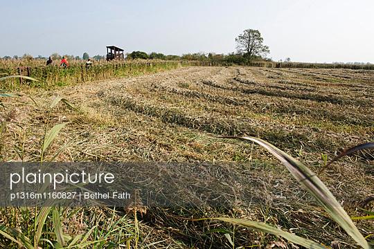Abgeerntetes Feld, Nationalpark Narew, Woiwodschaft Podlachien, Polen - p1316m1160827 von Bethel Fath