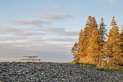 Picnic table and pine trees along the coast of Maine, Acadia. - p1166m2192049 by Cavan Images