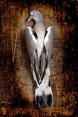 Dead Pigeon - p451m919221 by Anja Weber-Decker