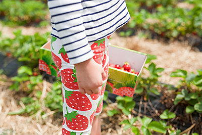 Child picking strawberries - p699m2007799 by Sonja Speck