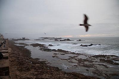 Coast at Essaouira - p775m900871 by angela pfeiffer