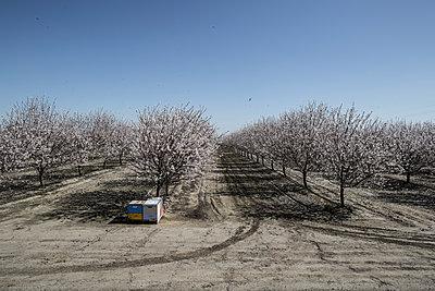 Almond farming - p1134m1440763 by Pia Grimbühler