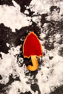 p451m2071681 by Anja Weber-Decker