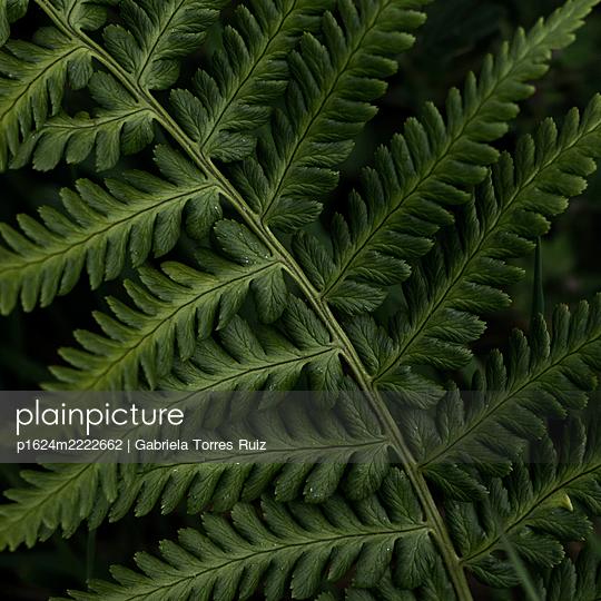 Fern leaf, close-up - p1624m2222662 by Gabriela Torres Ruiz