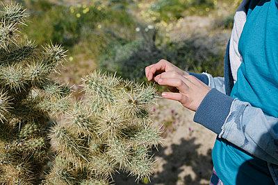 Boy picking spine of cactus, Cantil, California, United States - p924m2127297 by Viara Mileva