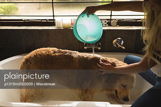 Hund in der Wanne - p1315m2003309 von Wavebreak