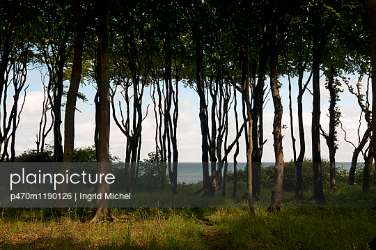 p470m1190126 by Ingrid Michel