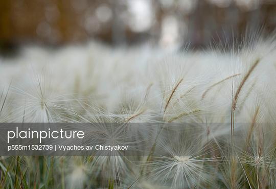 p555m1532739 von Vyacheslav Chistyakov