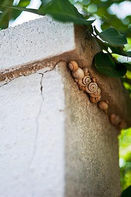 Hiding snails - p951m853304 by Caterina Sansone