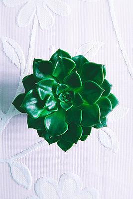 Succulent on floral tablecloth - p1149m1574272 by Yvonne Röder