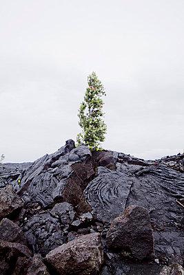 Hawaii landscape - p9070055 by Anna Fritsch