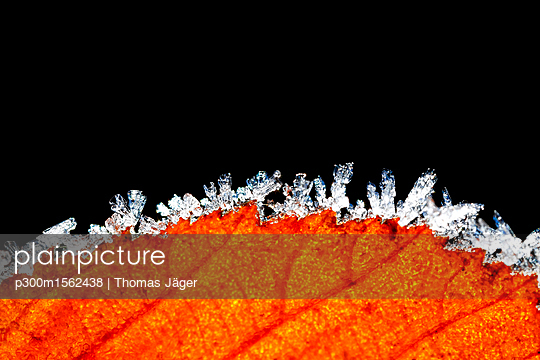 Hoarfrost at edge of autumn leaf in front of black background - p300m1562438 by Thomas Jäger