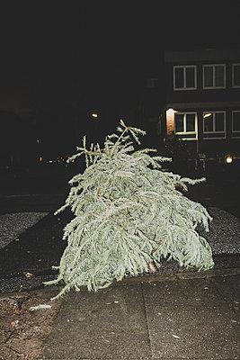 Trauriger Tannenbaum - p1345m1528701 von Alexandra Kern