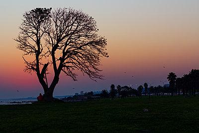 Couple sitting under bare tree - p623m2186526 by Pablo Camacho