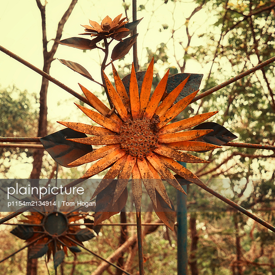 Eisenblume - p1154m2134914 von Tom Hogan