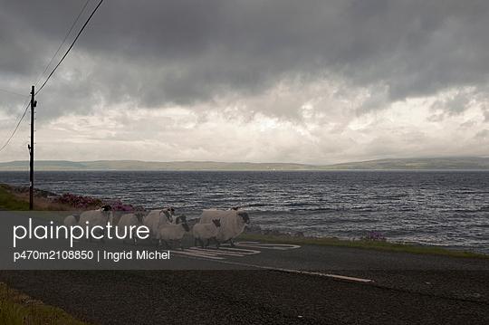 Schafe auf der Insel Arran, Schottland - p470m2108850 von Ingrid Michel