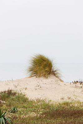 Beach grass - p248m966643 by BY