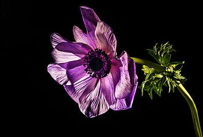 Flowers - p1594m2160851 by Françoise Chadelas