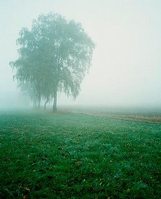 Milchige Agrarmystik - p3700047 von David Hartfiel