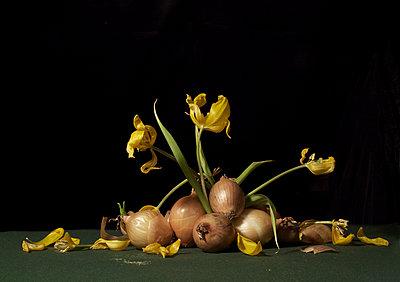 Tulpen mit Zwiebeln - p444m924657 von Müggenburg