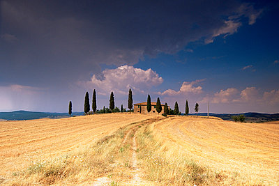 Cottage and cypress trees near Pienza, Val d'Orcia, Siena province, Tuscany, Italy, Europe - p8711820 by Sergio Pitamitz
