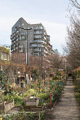 Garden in town - p445m1552790 by Marie Docher