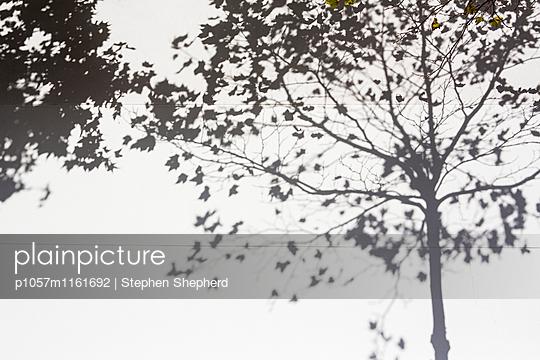 Lichterspiel - p1057m1161692 von Stephen Shepherd