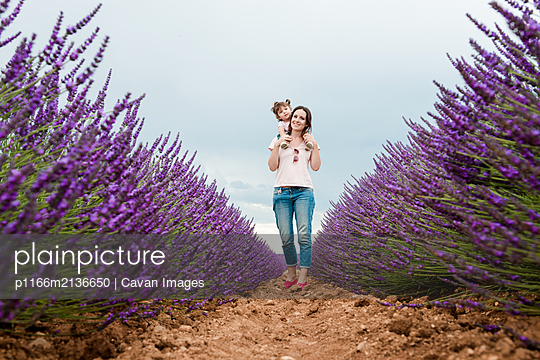 Mother and daughter walking among lavender fields in the summer - p1166m2136650 by Cavan Images