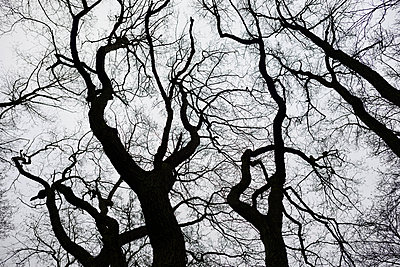 Bare trees - p816m1032345 by Bekkelund, Thorfinn