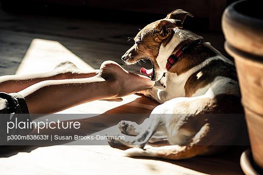 Germany;  Yawning dog at feet of boy - p300m838633f by Susan Brooks-Dammann