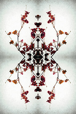Abstract kaleidoscope pattern of dried leaves and stems of wood sorrel plant creating pattern in centre - p1047m2134852 by Sally Mundy