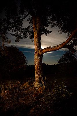 Einzelner Baum bei Nacht - p1418m2020545 von Jan Håkan Dahlström