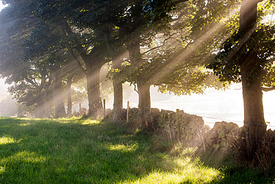 England, West Yorkshire, Calderdale. Beams of sunlight through trees on a misty morning. - p651m2007006 by Robert Birkby
