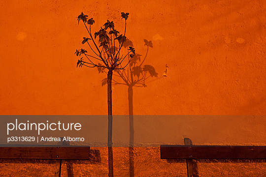 Flower with its shadow in a street bathed in yellow light at night - p3313629 by Andrea Alborno