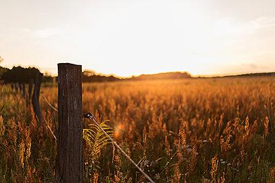 Elektrischer Weidezaun im Sonnenuntergang - p1396m1475436 von Hartmann + Beese