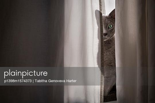 p1398m1574373 by Tabitha Genoveva Harter