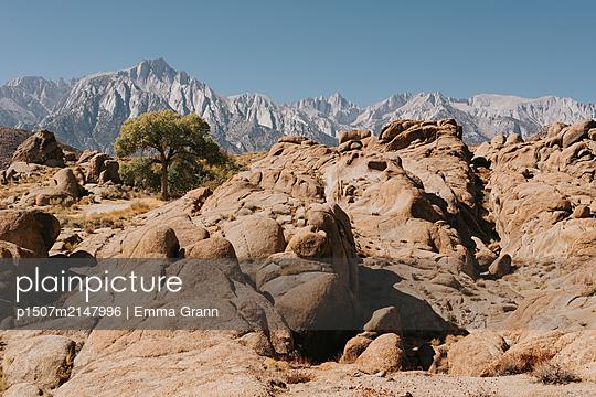 Lone Tree - p1507m2147996 von Emma Grann