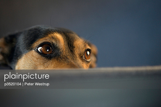 Close-up of a dog waiting
