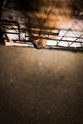 Animal shelter - p1076m987600 by TOBSN
