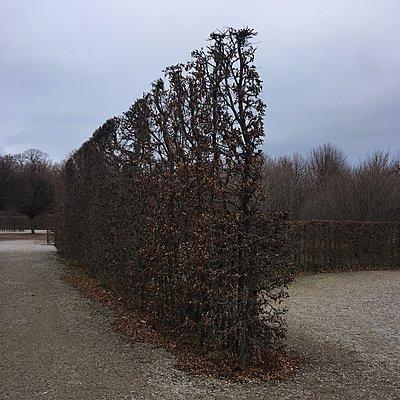 Gestutzte Hecke im Herbst, Schlosspark Schönbrunn - p1401m2229897 von Jens Goldbeck
