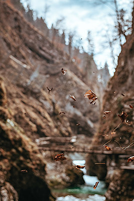 Leaves flying into the Vintgar Gorge in Slovenia - p1455m2081745 by Ingmar Wein