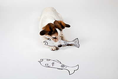Mongrel with drawn fishes on white ground - p300m2121901 by Petra Stockhausen