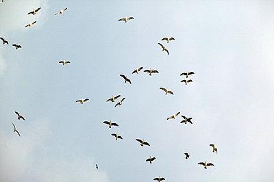 Birds in sky - p3880784 by L.B.Jeffries